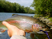 Fly-fishing for Atlantic Salmon, Sea Trout, Brown Trout, Arctic Grayling