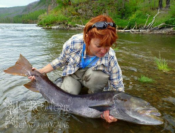 New taimen tours 2015 fishing season mongolia fly for Taimen fishing mongolia